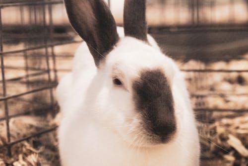 Kostenloses Stock Foto zu kaninchen
