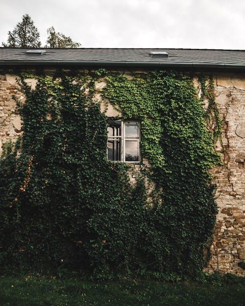 Fotobanka sbezplatnými fotkami na tému architektonický dizajn, architektúra, brečtan, budova