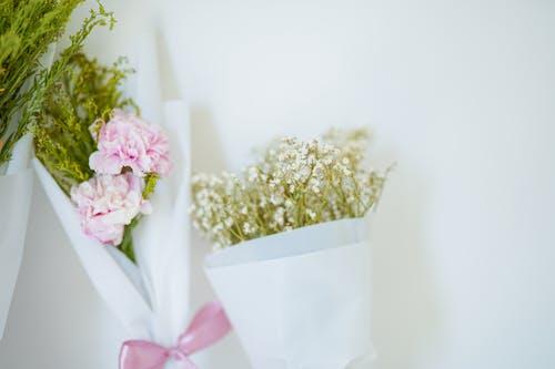 Základová fotografie zdarma na téma aranžování květin, barvy, bílé pozadí, flóra