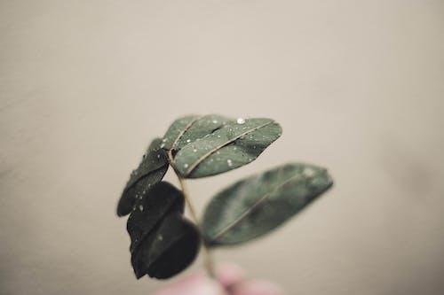 Darmowe zdjęcie z galerii z głębia pola, liście, łodyga, mokry