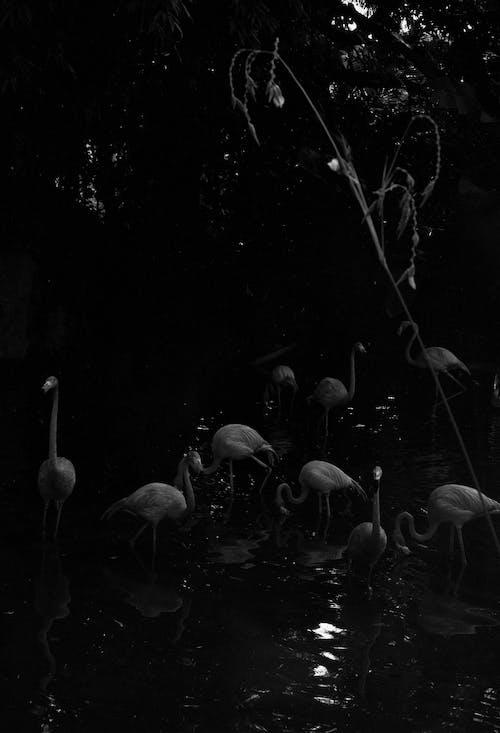bnw, lomography的, 一群鳥, 光與影 的 免費圖庫相片