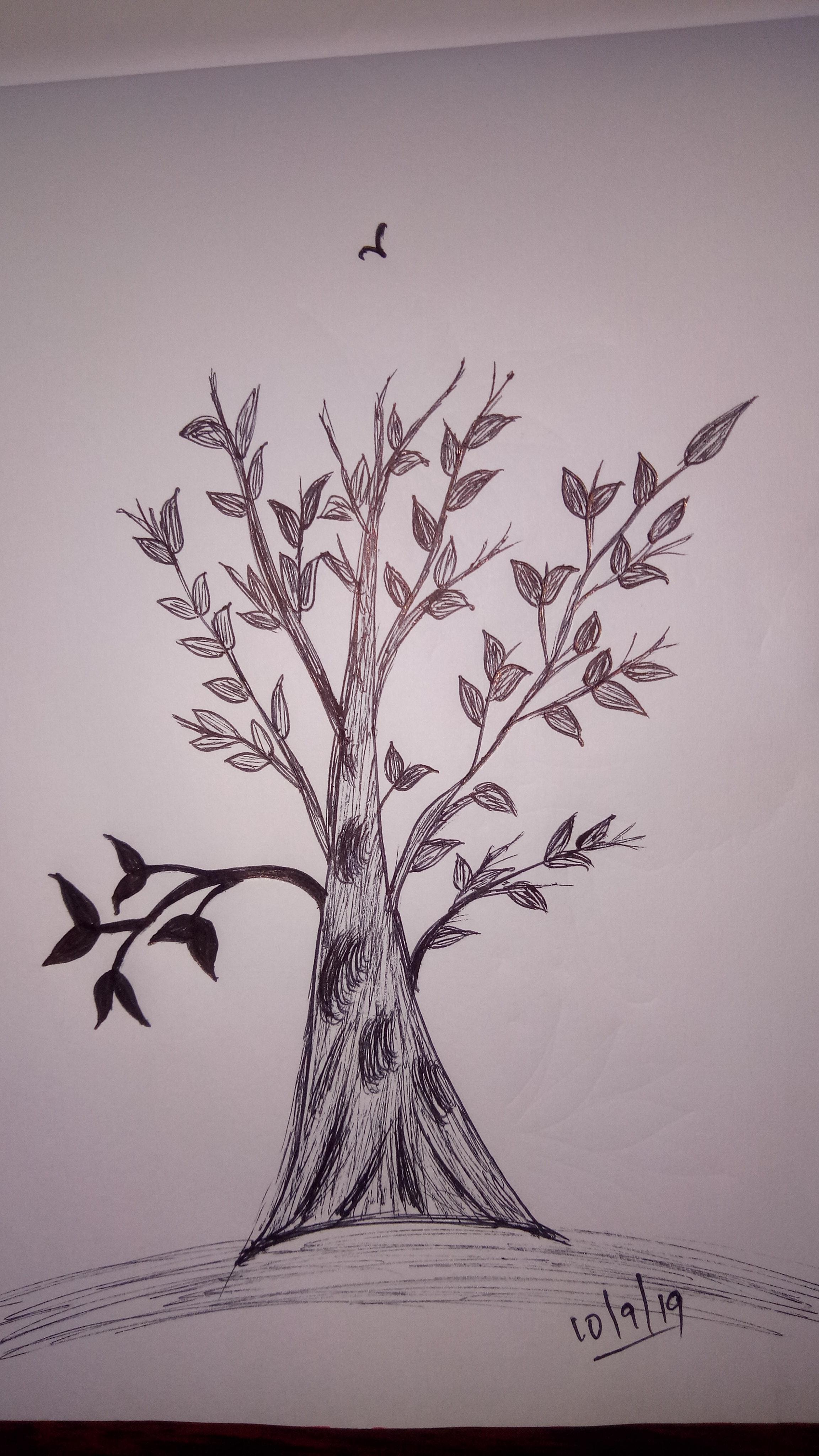 Foto Stok Gratis Tentang Sketsa Pohon