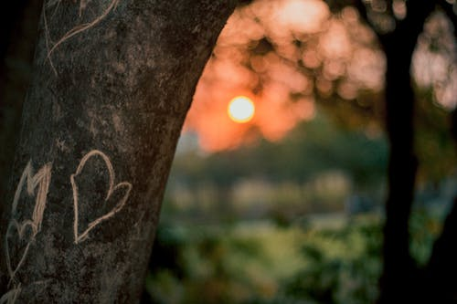 Immagine gratuita di amor, amore, carino, coração
