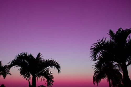 Ingyenes stockfotó alacsony szögű felvétel, drámai ég, élet a természetben, esti ég témában