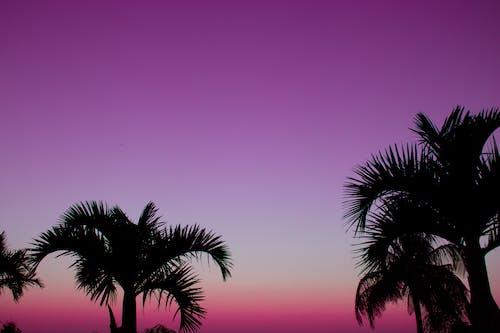 Foto stok gratis bagus, bayangan hitam, bidikan sudut sempit, cantik