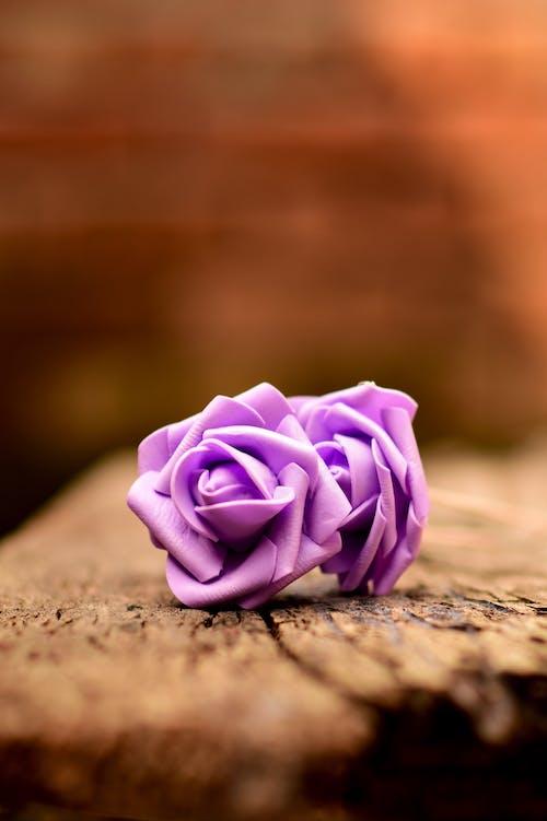 Бесплатное стоковое фото с nikon, красивый цветок, макросъемка, максросъемка