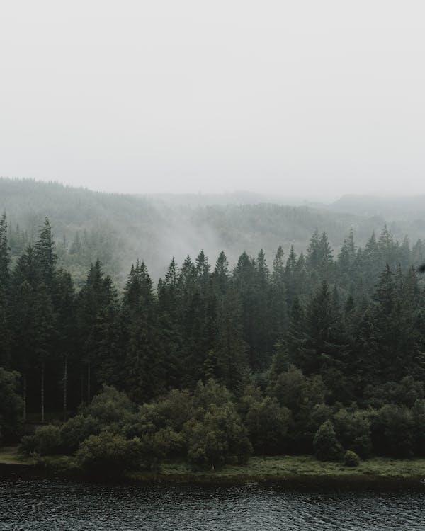 Základová fotografie zdarma na téma borovice, jedle, jehličnany