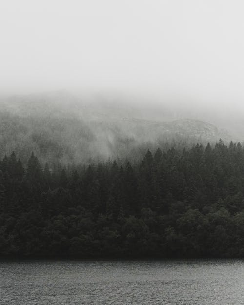 View Of The Foggy Lush Mountain Forest By Lake
