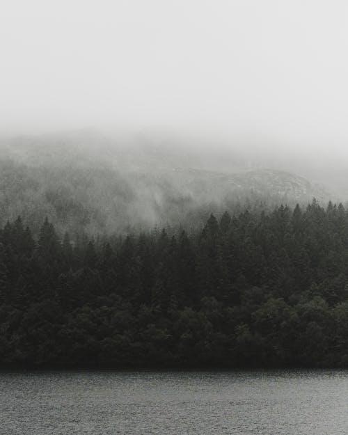 Безкоштовне стокове фото на тему «вічнозелений, гора, гори, дерева»