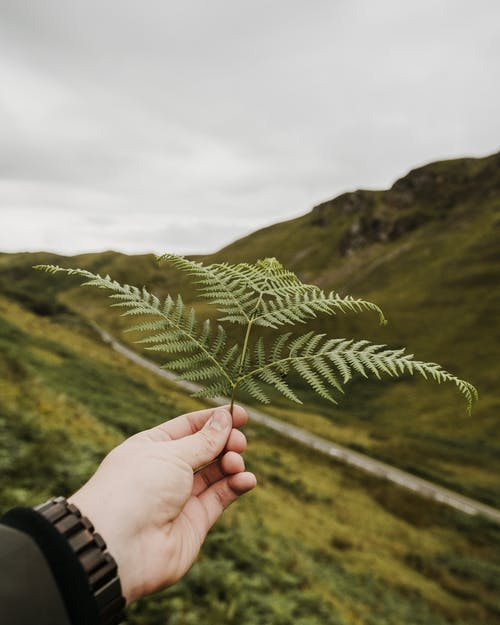 Shallow Focus Photo of Fern Leaves Held By A Person