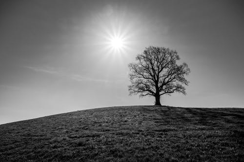 Monochrome Photo Of Tree Under The Sun