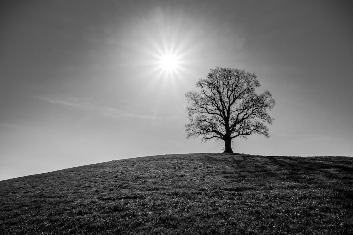 albero, ambiente, bianco e nero