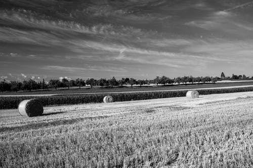 Monochrome Photo of Hay Rolls on Field