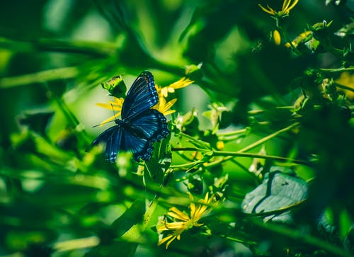 Foto stok gratis flora, fotografi makro, halus, kupu-kupu