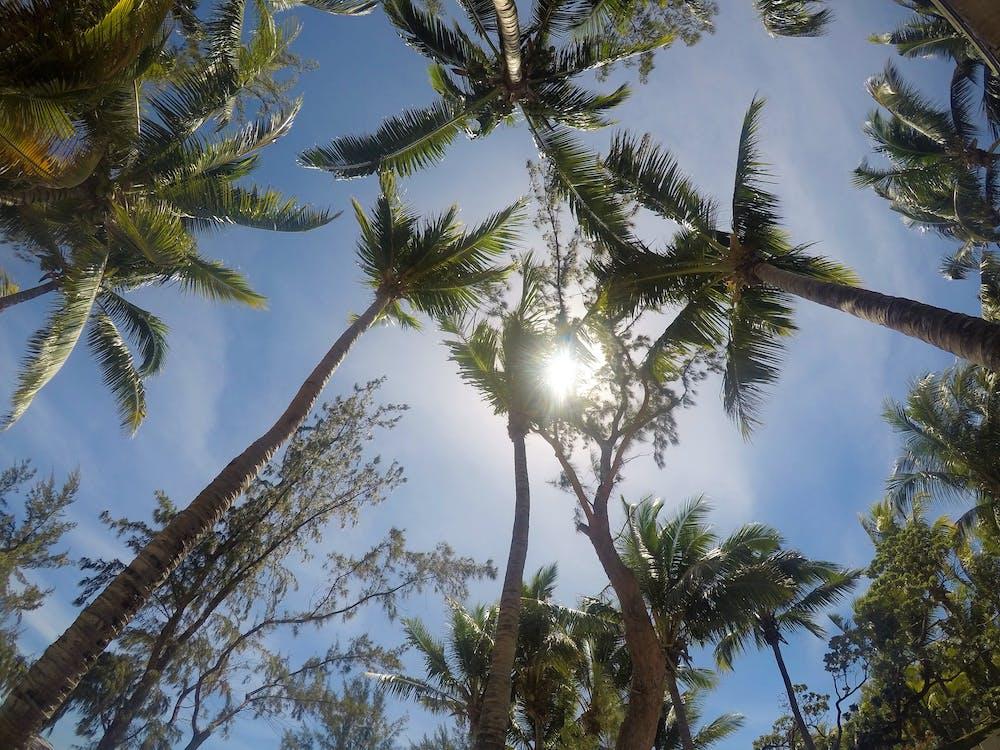 fotografering fra lav vinkel, høj, kokostræer