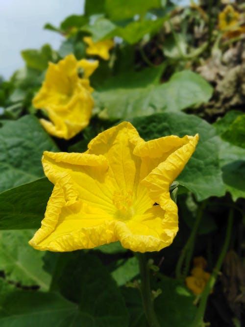 Darmowe zdjęcie z galerii z #kwiat, kolory, kwiat, zielony