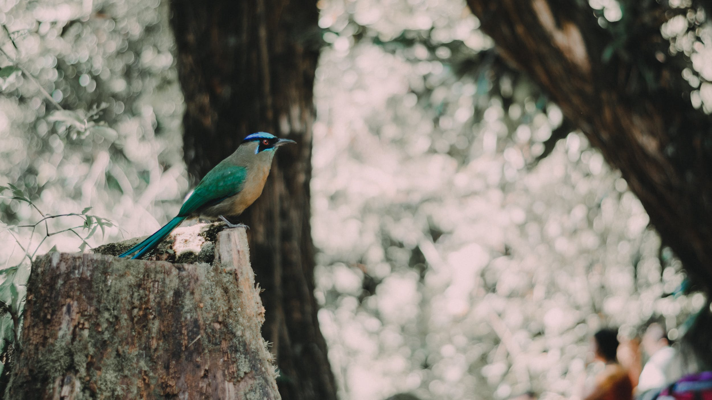 Free stock photo of bosque, nature, pájaro