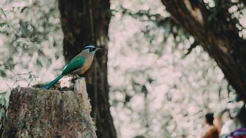 パジャロ, ボスク, 自然の無料の写真素材
