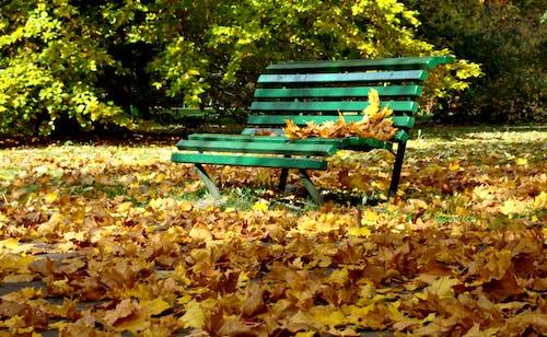 Základová fotografie zdarma na téma krajina, podzim