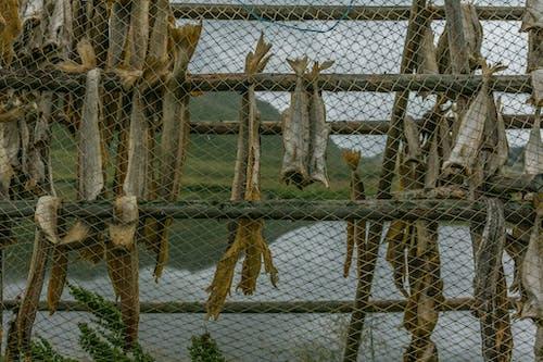 Ingyenes stockfotó halszárítás, lofoten, lofoten-szigetek témában