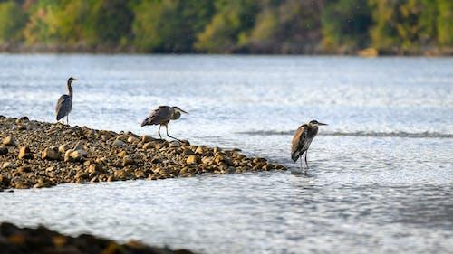 kuşlar içeren Ücretsiz stok fotoğraf