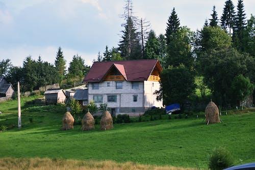 Gratis stockfoto met boerderij, boerenwoning, bomen, buiten