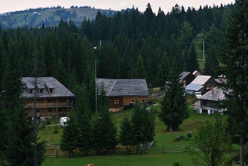Photos gratuites de à feuilles persistantes, arbres, cabine, campagne