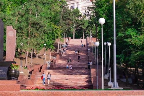 Foto d'estoc gratuïta de a l'aire lliure, arbres, arquitectura, art
