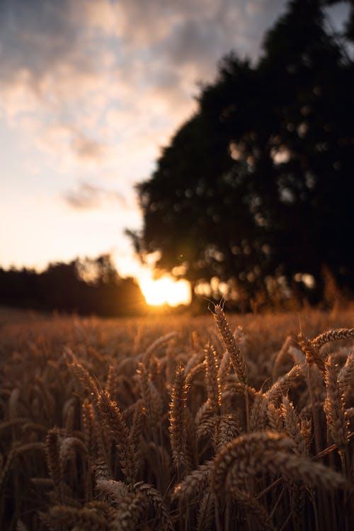 夏天, 夏季, 天性, 太陽 的 免費圖庫相片
