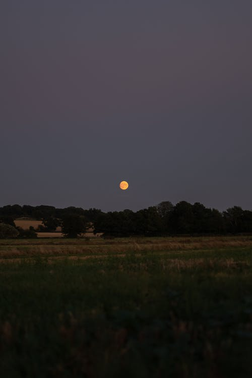 Free stock photo of blood moon, country, country side, detailed moon