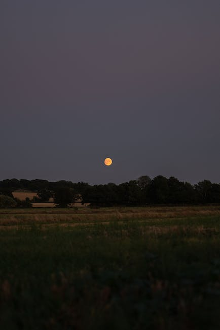 View of the full moon over the trees in the open field