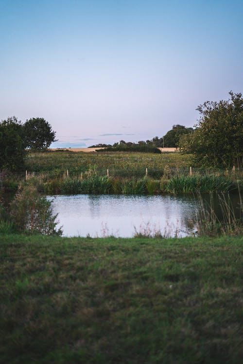 Foto d'estoc gratuïta de a pagès, aigua, Anglaterra, bassa de jardí