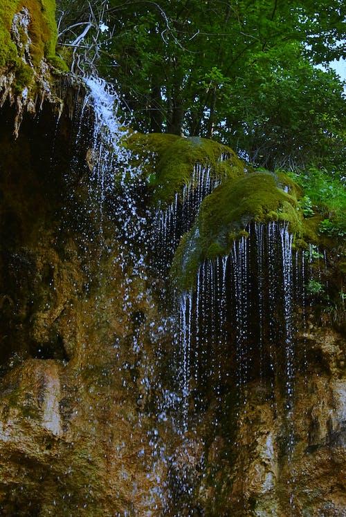 Foto profissional grátis de água, ao ar livre, árvores, cachoeiras