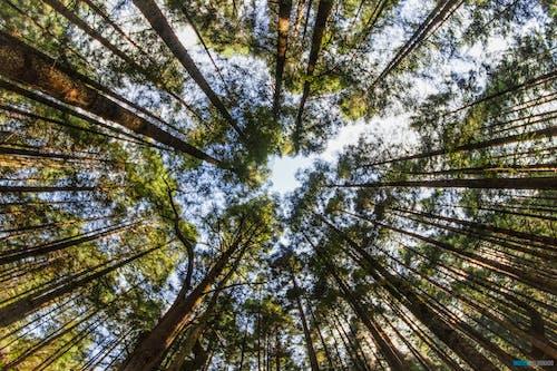 Fotobanka sbezplatnými fotkami na tému obloha, stromy