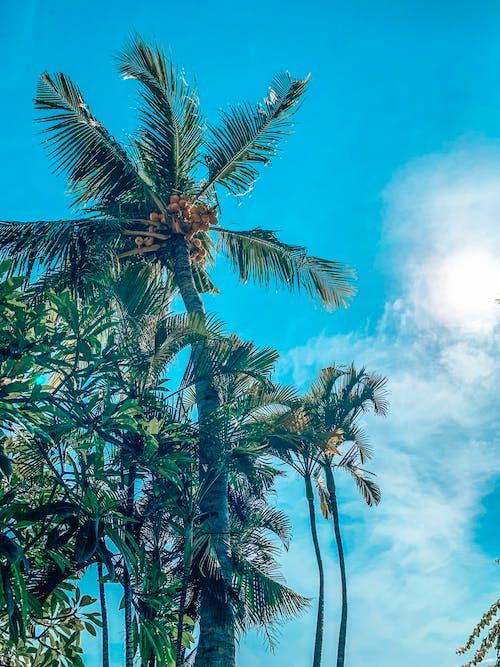 印尼, 天空, 巴厘島 的 免费素材照片