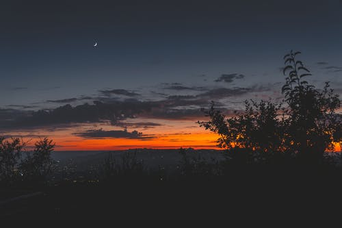 나무, 새벽, 새벽 황혼, 역광을 받은의 무료 스톡 사진