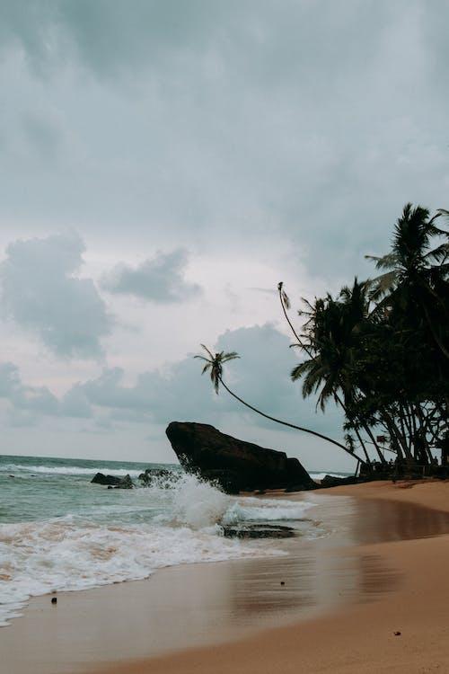 Photos gratuites de bord de mer, cailloux, calme, cocotiers