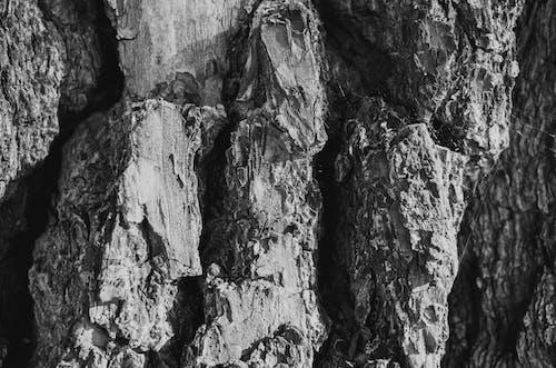 Darmowe zdjęcie z galerii z chropowaty, czarno-biały, drzewo, fotografia monochromatyczna