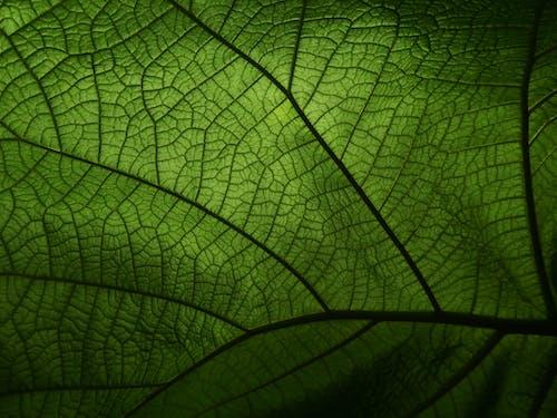 Foto stok gratis daun, hijau, kilang, merapatkan