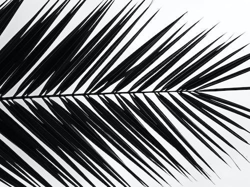 Foto stok gratis bayangan hitam, daun palem, Daun-daun, dedaunan