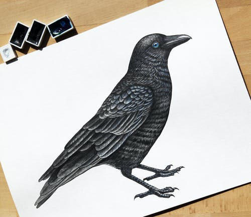 Photo Of Crow