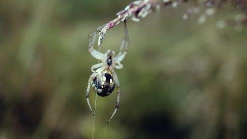 Web, 動物, 掛, 昆虫壁纸 的 免费素材照片