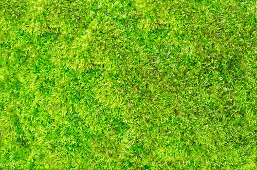 Free stock photo of background, fresh, grass, green