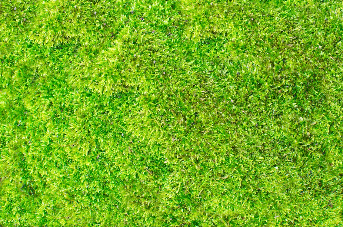background, fresh, grass