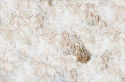 Free stock photo of animal, background, dog, fur