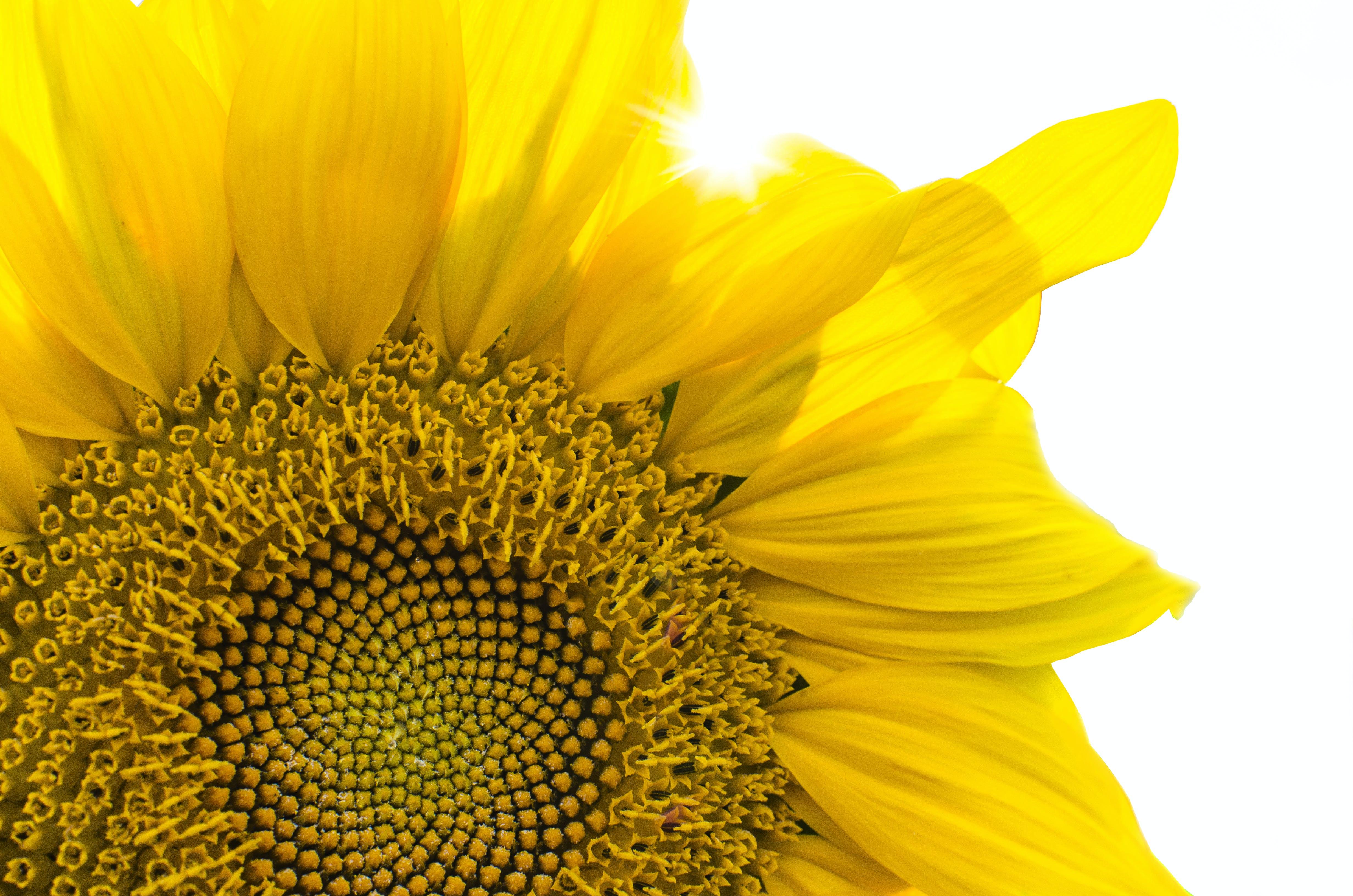 Gratis lagerfoto af blomst, blomstrende, Botanisk, dekorativ