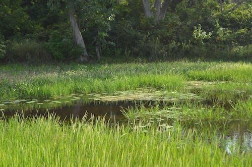 Základová fotografie zdarma na téma bažina, lekníny, listy, mokřady