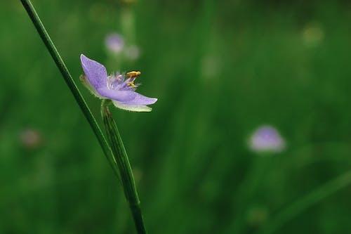 园艺, 天性, 头花, 水兵 的 免费素材照片