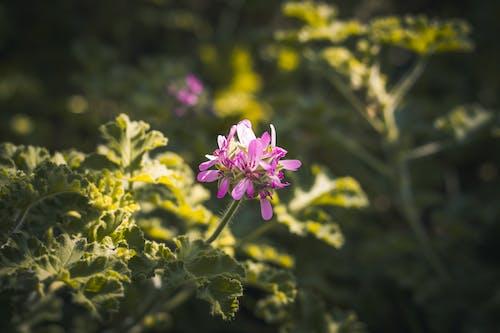 Бесплатное стоковое фото с боке, ботанический сад, завод, зеленый