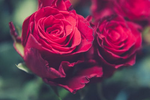 Bahçe, Çiçek demeti, Çiçekler, doğa içeren Ücretsiz stok fotoğraf
